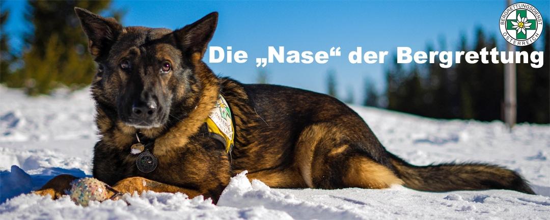ÖBRD Lawinen- und Suchhunde