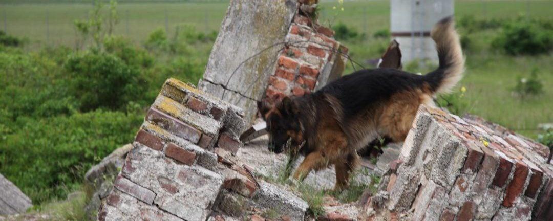 ÖBRD Such- und Lawinenhunde