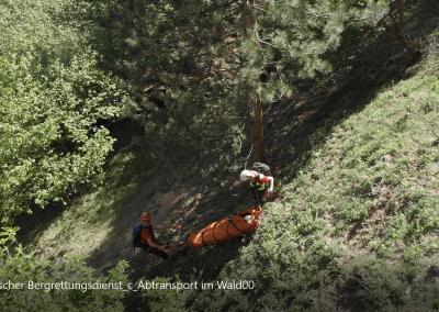 Abtransport im Wald_1