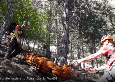 Abtransport im Wald_2